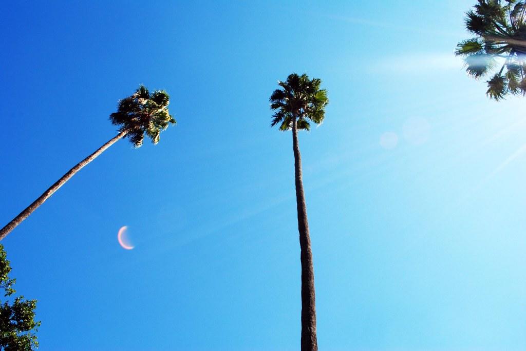 Beverly Hills palm tree vibe at the Albury Botanical Gardens